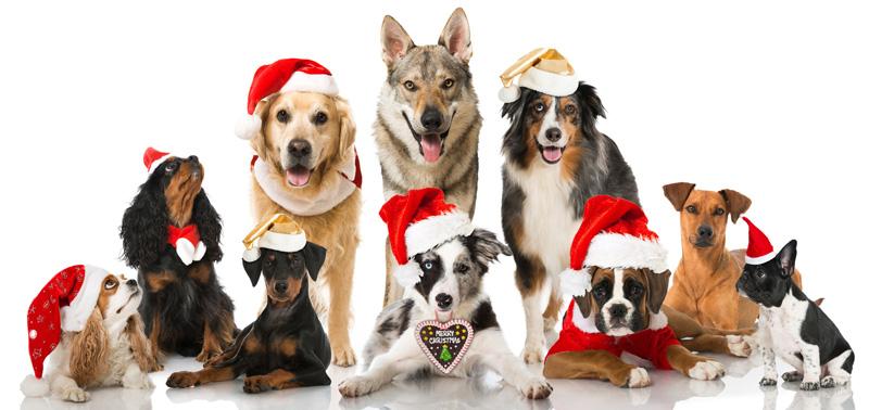 Bildergebnis für frohe weihnachten hund