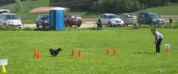 Rallye Obedience