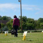 Rally Obedience-Staffel bei perfektem Frühlinswetter