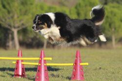 Hundeschule [bei] Steyr - Kursprogramm